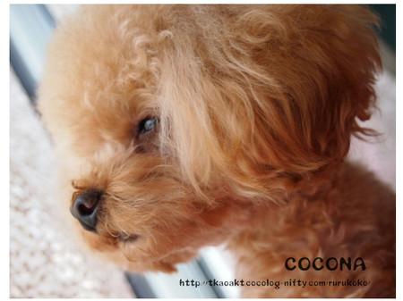 Cocona_7