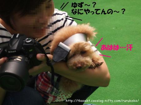Yuzu_1
